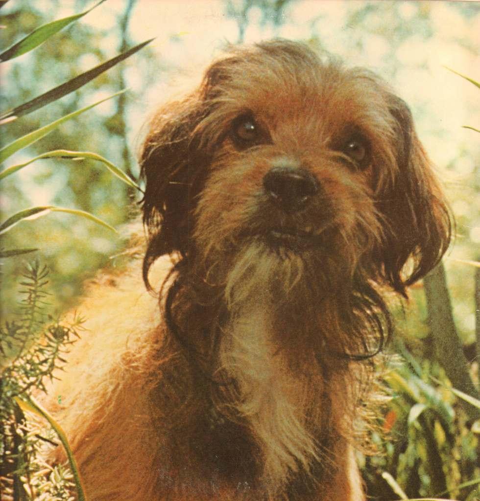 Higgins (Benji)